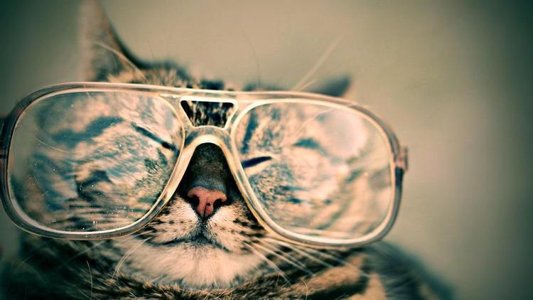 cat-984097_960_720.jpg