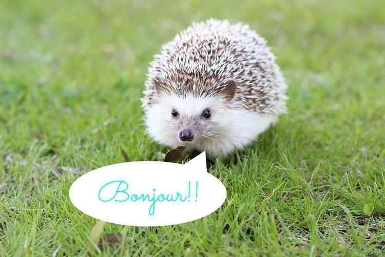 hedgehog-663638_960_7201.jpg